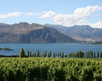 wineries-and-cusine-img_2436