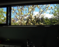 view-from-courtyard-house-kitchen-window-tiritiri-pa105649